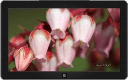 Gratis: Neue Windows Themes von Blumenwiese bis Bi