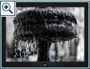 Windows-Themes von Weltraum bis Waldweg (30.08)