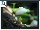 Windows-Themes von Weltraum bis Waldweg (30.08) - Bild 4