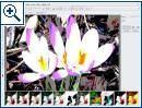 Magix Foto Designer