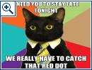 Katzen-Meme