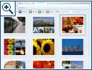 Microsoft Max - Bild 1