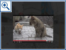 Japanisches Katzen-Streetview