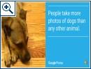 Google Fotos: Fakten zum Foto-Dienst