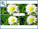 Kamera-Vergleich: Huawei P9, LG G5, HTC 10 und Galaxy S7 - Bild 5