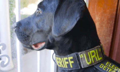 Elektronik-Spürhund URL