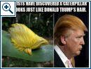 Donald Trump-Memes - Bild 1