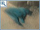 Nasa: Die blaue Mars-Düne