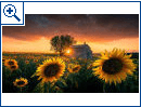 Windows 10 Wallpaper-Sets