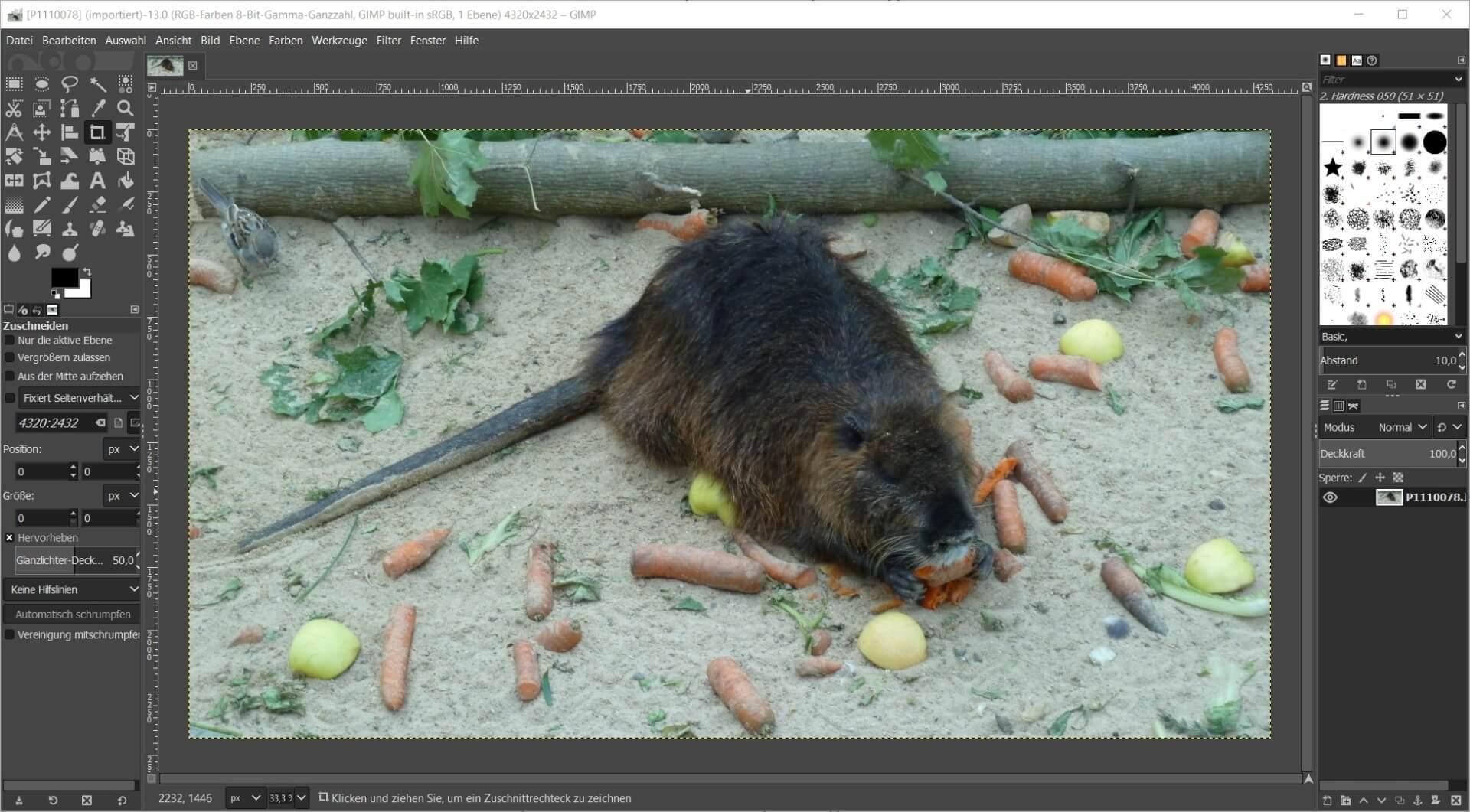 fotobearbeitungsprogramm gimp kostenlos