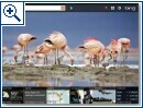 Bing for iPad - Bild 1
