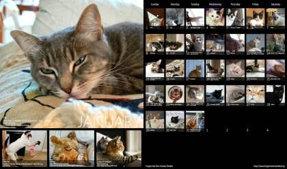 Microsoft Katzenkalender