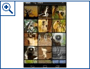 Foto-Sharing-App 500px (Android-Version)