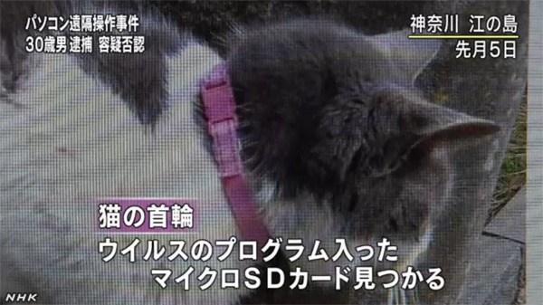 Japan Katzen Hacker