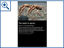 Windows Phone: Bing Sport