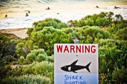 Hai-Warnung per Tweet