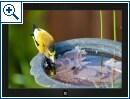 Gratis: Neue Windows Themes von Fantasy bis Vogel